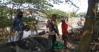Jelang Tatanan baru Patroli Polsek Kapetakan Polres Ciko bubarkan Arena Judi Sabung Ayam